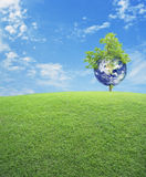 Earth with tree and green grass field over blue sky, Save the ea Stock Image