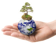 Earth with a Tree in a hand Stock Photos