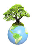 Earth and tree Stock Photos