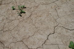 Earth In Trouble. Tightly packed dirt with distress marks. Sandy type surface Royalty Free Stock Photo