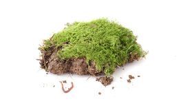 Earth worm and piece of soil with moss Royalty Free Stock Images