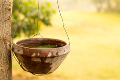 Earthenware bird feeder hanging from a tree Royalty Free Stock Photos