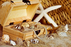 gold coins and seashells in wooden treasure chest Stock Images