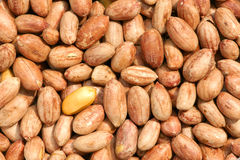 Earthnuts Royalty Free Stock Photography
