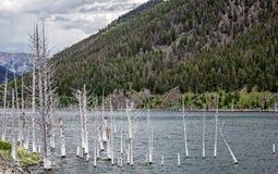 Earthquake Lake Royalty Free Stock Photography