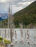 Earthquake Lake Stock Photography
