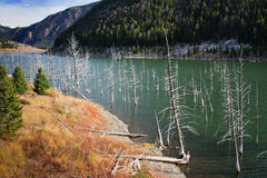 Earthquake See, Montana Lizenzfreies Stockbild