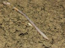 Earthworm Royalty Free Stock Photos