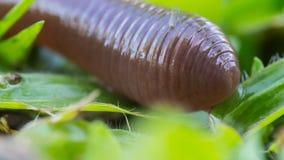 Earthworm Crawl Stock Photos
