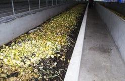 Earthworm farm Stock Image