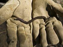 Earthworm and Garden Glove stock photos