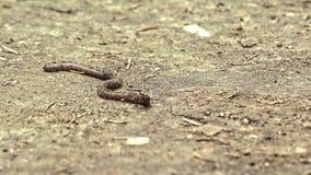 Earthworm macro stock footage