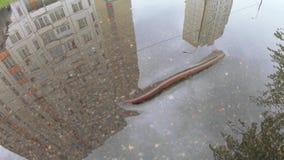 Earthworm na asfalcie zbiory