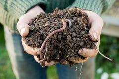 Earthworm na kopu brud na rękach obrazy stock