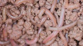 Earthworm video Stock Photos