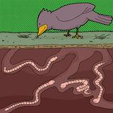 Earthworms and Bird Stock Image