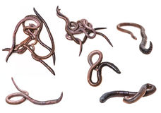 Earthworms collection Stock Photos