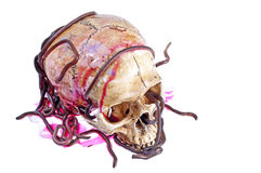 Earthworms on the skull. Earthworms and the skull on with white background Royalty Free Stock Photo