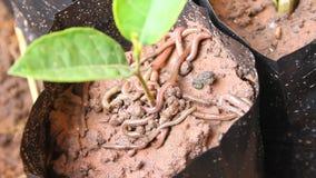 Earthworms Stock Image