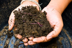 Earthworms and soil in hand Stock Photography