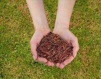 Earthworms w ręce Zdjęcia Royalty Free