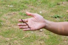earthworms w rękach Obraz Stock