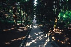 earthy больше моего камня stairway scenics портфолио Стоковое фото RF