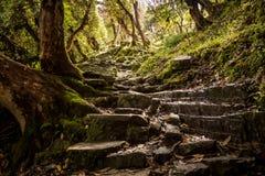 earthy больше моего камня stairway scenics портфолио Стоковые Изображения RF