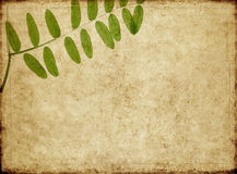 Earthy background image. Lovely background image with floral elements. very useful design element Stock Image