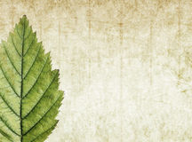 Earthy background image. Lovely background image with floral elements. very useful design element Stock Photos