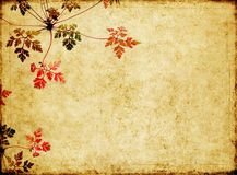 Earthy background image. Lovely background image with floral elements. very useful design element Stock Photography