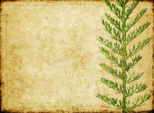 Earthy background image. Lovely background image with floral elements. very useful design element Royalty Free Stock Photos