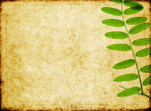 Earthy background image Royalty Free Stock Photography