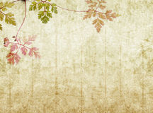 Earthy background image. Lovely background image with floral elements. very useful design element Stock Images