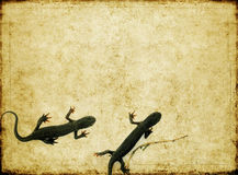 Earthy background image. Lovely background image with close-up of a couple of salamanders. very useful design element Royalty Free Stock Images
