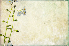 Earthy background image. Lovely background image with floral elements. useful design element Royalty Free Stock Photos