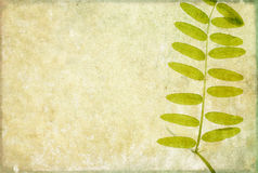 Earthy background image. Lovely background image with floral elements. useful design element Royalty Free Stock Image
