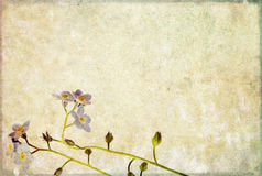 Earthy background image. Lovely background image with floral elements. useful design element Royalty Free Stock Photography