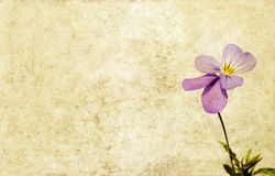 Earthy background image. Lovely background image with floral elements. useful design element Stock Images