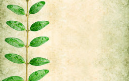 Earthy background image. Lovely background image with floral elements. useful design element Royalty Free Stock Images