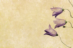 Earthy background image. Lovely background image with floral elements. useful design element Stock Image