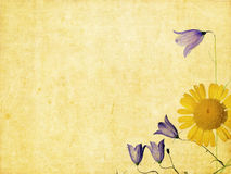 Earthy background image. Lovely background image with floral elements. useful design element Royalty Free Stock Photo