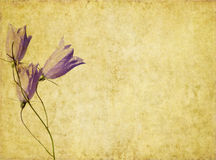 Earthy background image. Lovely background image with floral elements. useful design element Stock Photography
