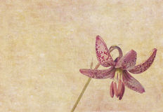 Earthy floral background Royalty Free Stock Photography