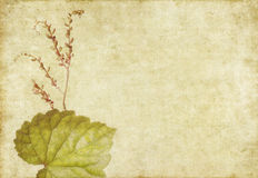 Earthy floral background Royalty Free Stock Photo