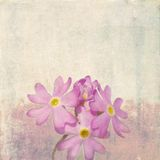Earthy floral background Stock Photography