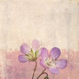 Earthy floral background Stock Photo
