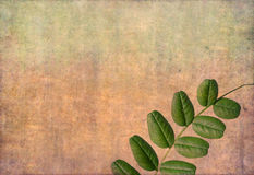 Earthy floral background Royalty Free Stock Images
