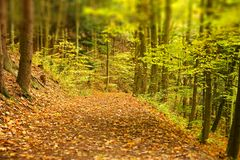 Earthy forest path. An earthy forest path with autumn foliage over it Royalty Free Stock Photo