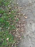 Earthy ground 3 Royalty Free Stock Photo